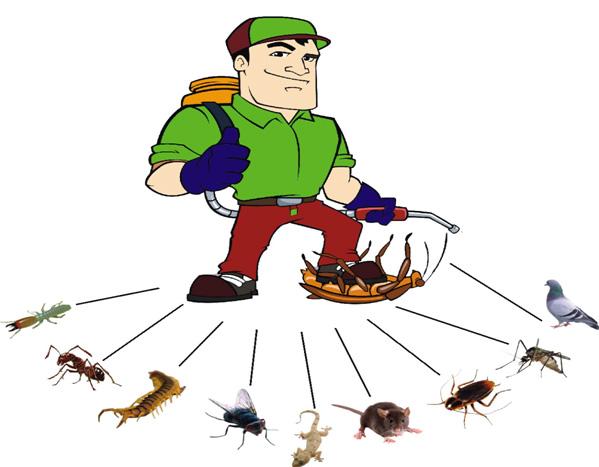 pest-control-service-provider