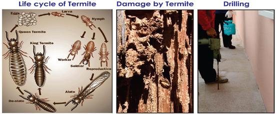 Post-Construction-Termite-Management
